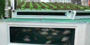 aquaponics-hydroponics-10-750x410